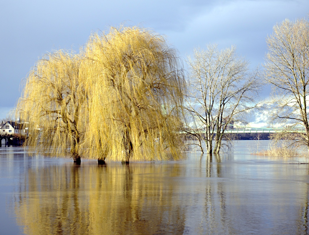 Köln, Hochwasser